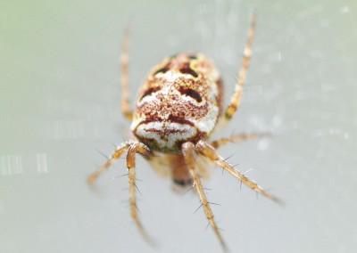spiderMask